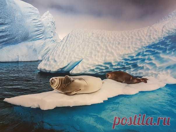12 сентября в Москве открылась небольшая фотовыставка работ Пола Никлена, великого фотографа-полярника и автора National Geographic. Вход свободный, заглядывайте на огонек!
