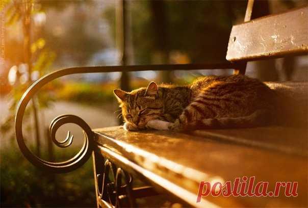 Пусть каждое утро будет особенным! Теплого осеннего утра