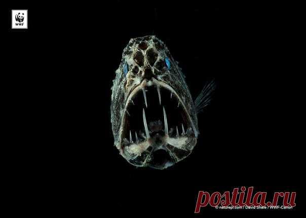 Длиннорогий саблезуб, серпокрылый листонос и айе-айе – эти и другие твари в подборке самых страшных животных.