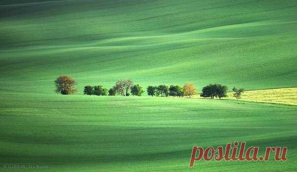 На волнах зеленого океана. Моравия, Чехия. Автор фото – Q-lieb-in: nat-geo.ru/photo/user/52530/