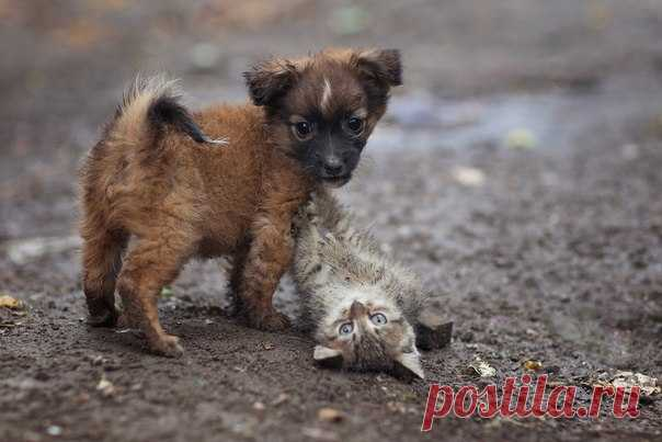 «Друзья». Автор фото — Юрий Коротун: nat-geo.ru/photo/user/204451/