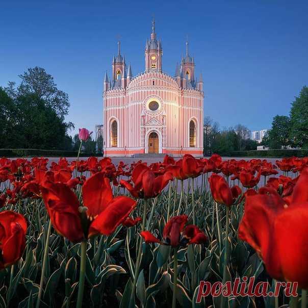 Цветение тюльпанов около Чесменской церкви ночью. Нежных снов, Питер