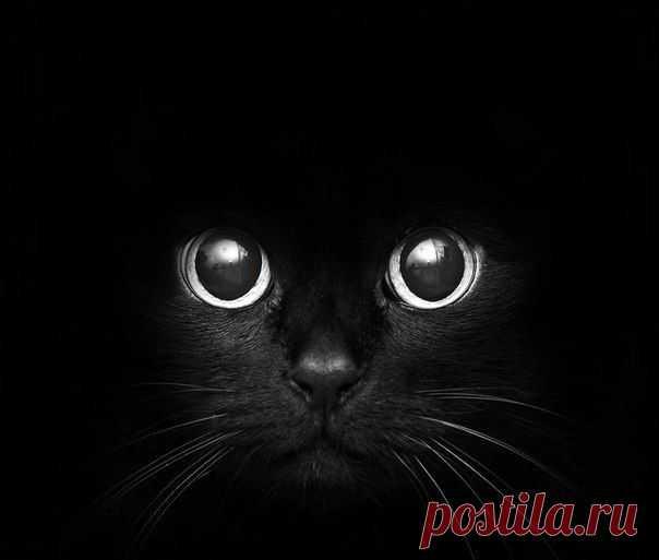 Черный  кот  в черном квадрате