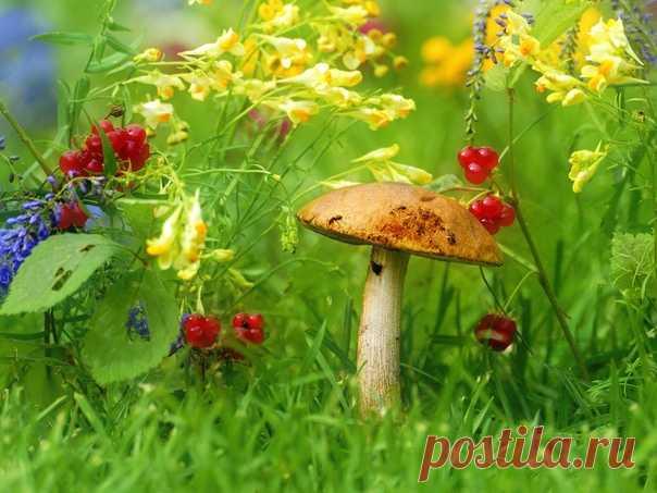 «Последний месяц лета» Фотограф – Влад Владиленов: nat-geo.ru/community/user/46803/