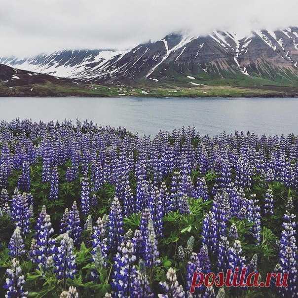 #Исландия@discoverygroup