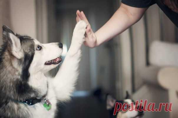 Притча о Собаке и Человеке - Сайт Александра Гордеева