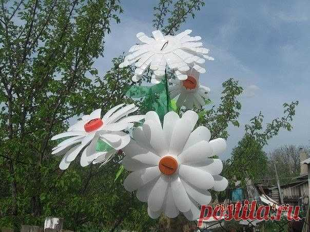 Camomiles from plastic bottles