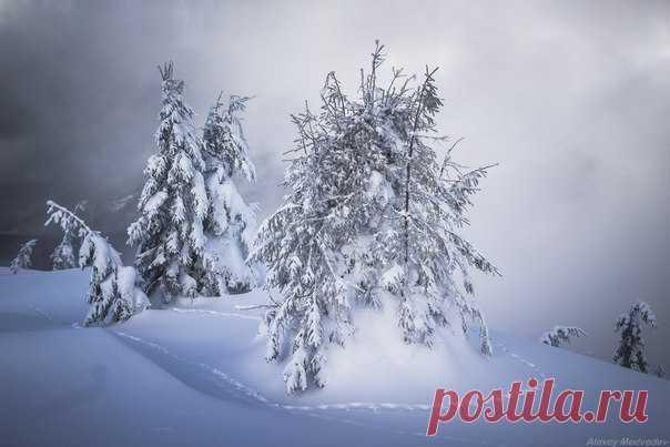 «Лассо» от лисы. Карпаты, Украина. Автор фото – Алексей Медведев: nat-geo.ru/photo/user/296370/