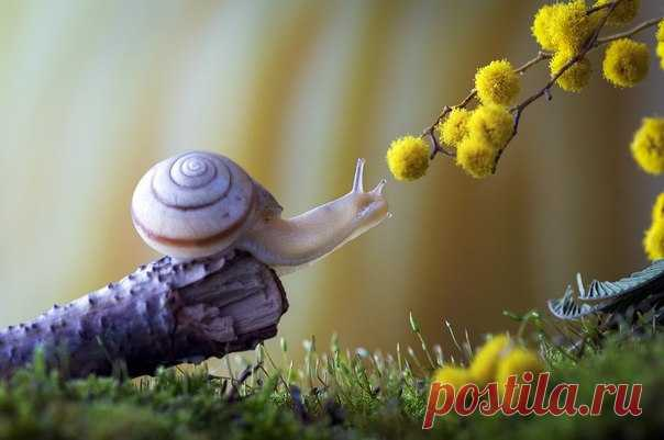 «Запахло весной». Автор фото — Евгений Анатольевич: nat-geo.ru/photo/user/296175/