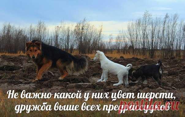 Художник | VK