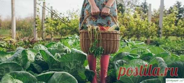 Treinta siete astucias para los horticultores y los horticultores.