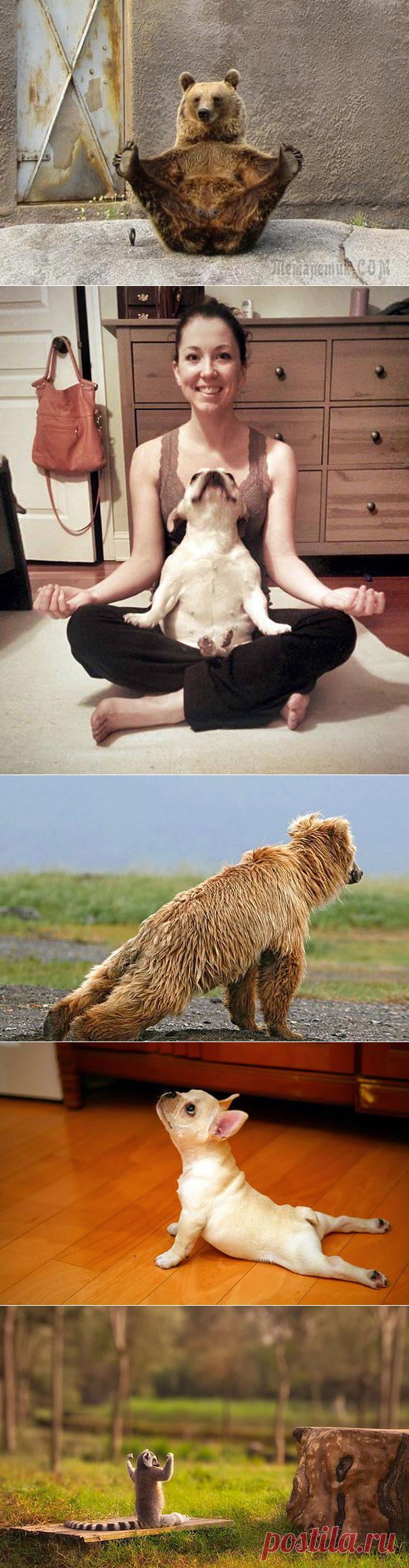 Йога в исполнении животных