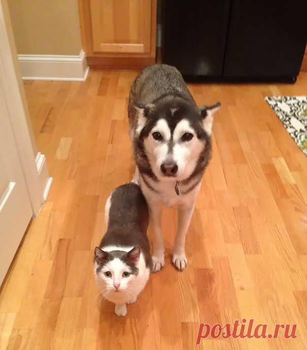 17 животных-«братьев» от разных мам. Удивительное сходство!
