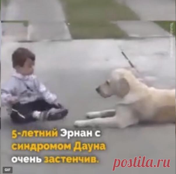 El perro y el muchacho con el síndrome de Dauna. La bondad y la preocupación demuestran que los perros los mejores amigos...