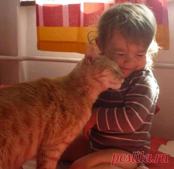 23 доказательства того, что вашему ребёнку нужен кот
