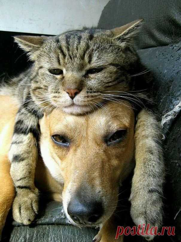 Картинки смешные с кошками и собаки