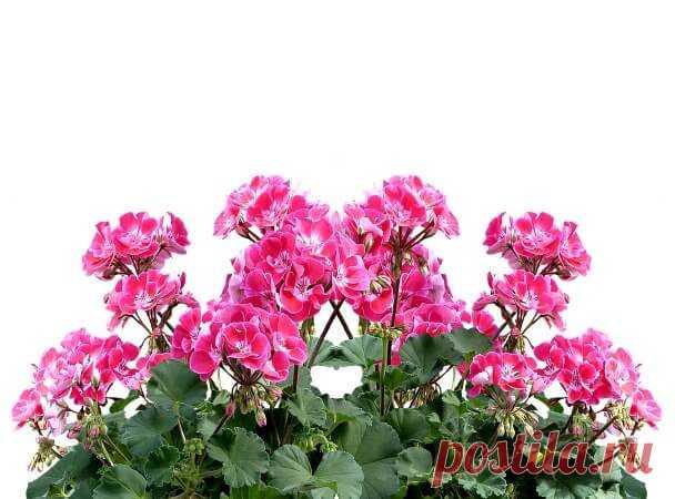 ТОП-10 овощей и растений, которые можно выращивать зимой на балконе