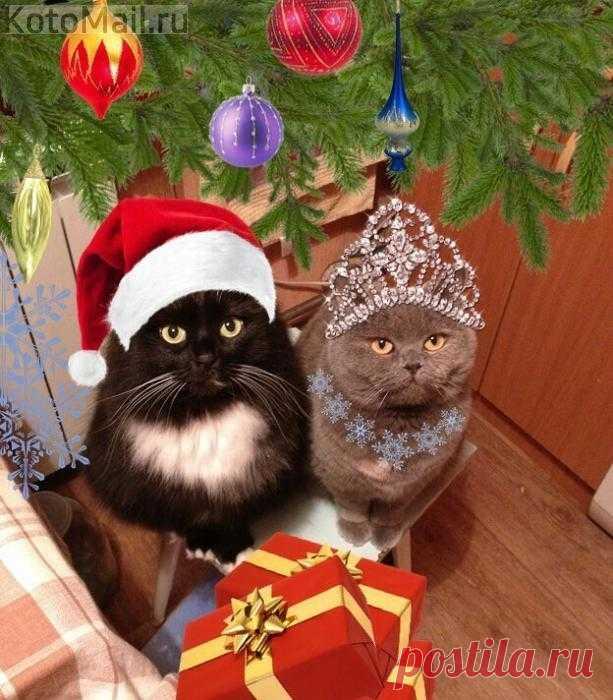 Дед Мороз с Снегурочкой пришел