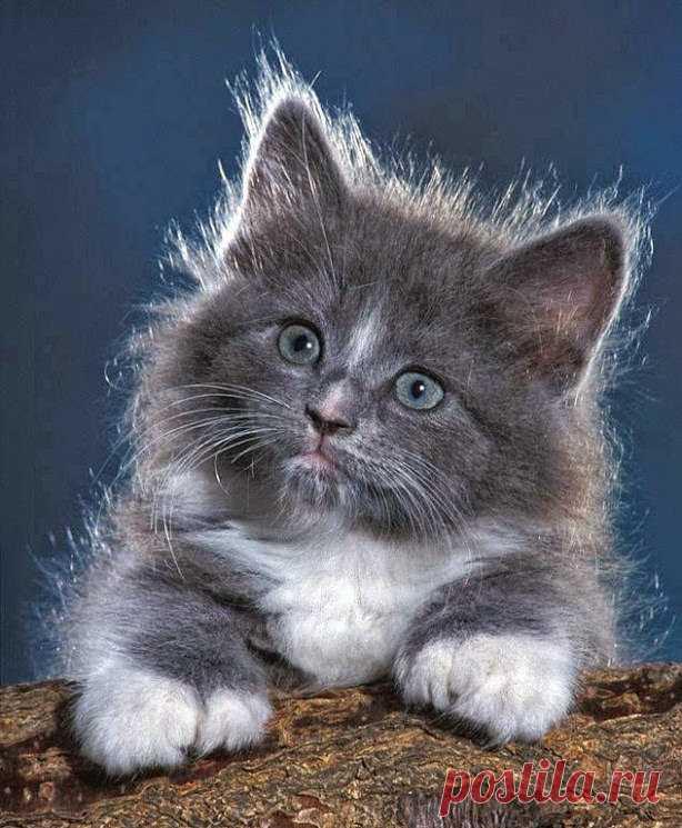 Картинки анимашки котенок, дедушке день рождения