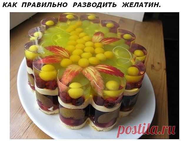 как правильно развести желатин для десерта