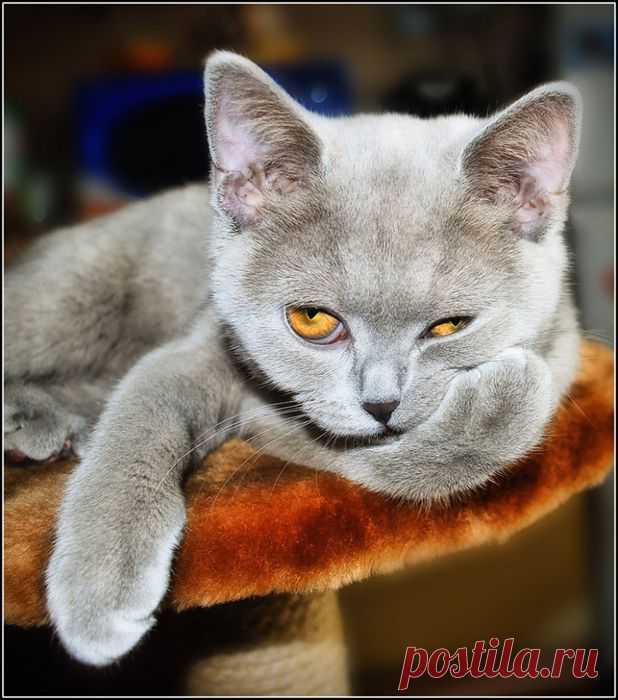 животные красивые фото картинки - 141 тыс. картинок. Поиск@Mail.Ru