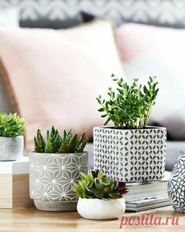 22 невероятно красивых идеи декора гостиной с помощью суккулентов | Плюшкин-Вилль | Яндекс Дзен