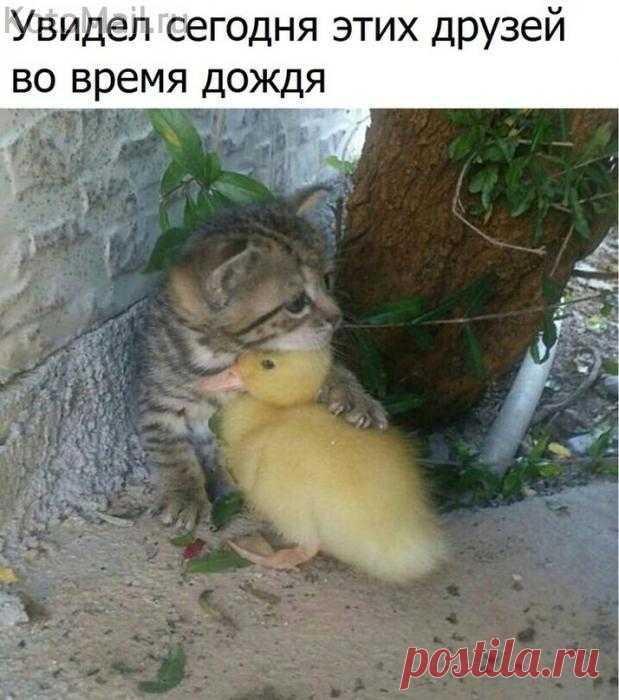 La foto única | KotoMail.ru