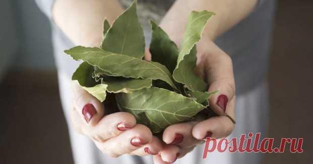 Лавровый лист невероятно мощное средство от высокого давления, сахара в крови, кашля, отёков и лишнего веса! Листья этого растения широко используется в кулинарии из-за его замечательного аромата. Но лавр — не просто приправа — это также лекарственное растение, используемое при лечении различных заболеваний. Лавровый лист — очень мощное народное средство. Это отличное мочегонное, противоревматическое,...