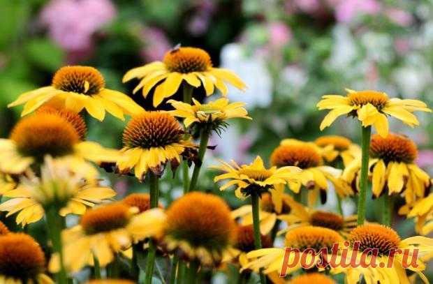 Рай для ленивых садоводов: растения которые не требуют особого ухода