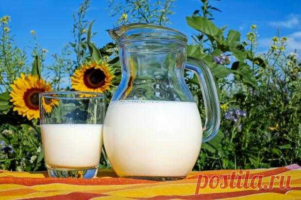 Чем заменить коровье молоко: 6 альтернатив полезного напитка