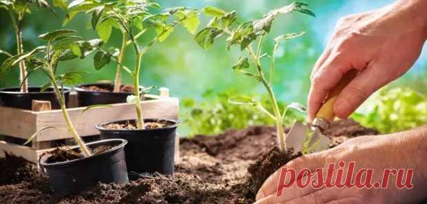 Силы природы помогут огороду: кабачки сажайте утром, а клубнику — вечером - ДОСТОЙНАЯ ЖИЗНЬ НА ПЕНСИИ - медиаплатформа МирТесен