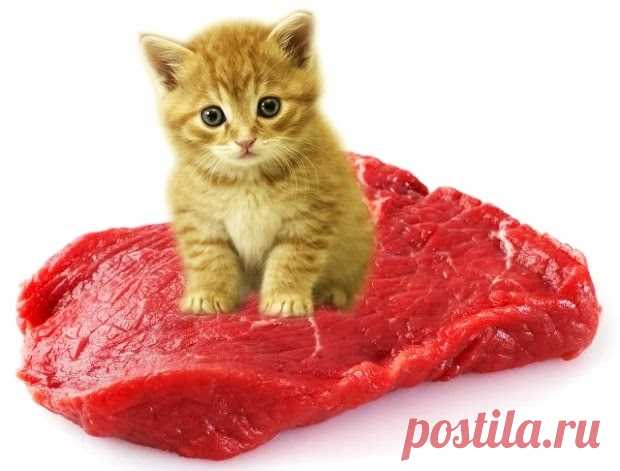 Маленький котик борется за мясо Котенок вступил в бой за мясо — рыжий герой интернета победил