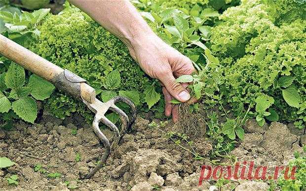 Соль и уксус против сорняков: рецепт, пропорции, отзывы