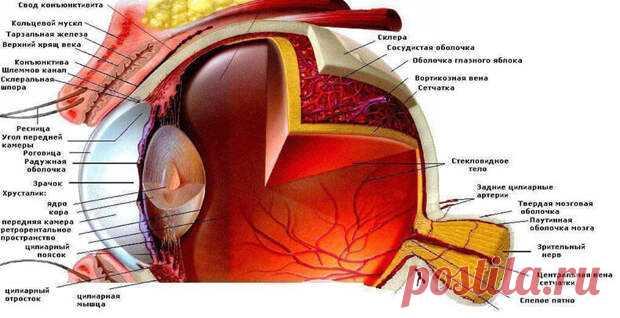 Синдром сухого глаза... - Познавательный сайт ,,1000 мелочей