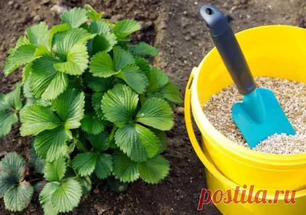 Как, чем и когда подкормить сад осенью - Цветочки - медиаплатформа МирТесен