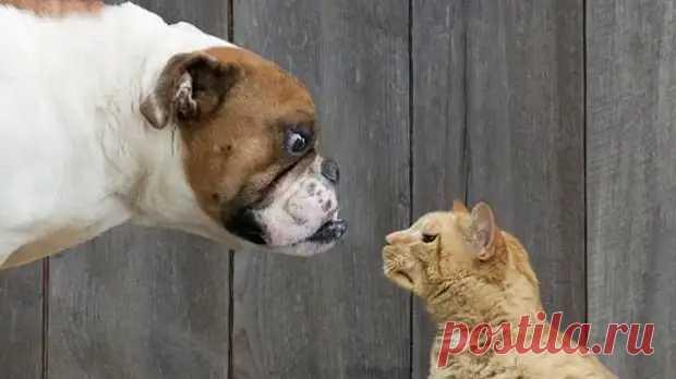 Кошки vs. собаки: кто умнее? - ПолонСил.ру - социальная сеть здоровья - медиаплатформа МирТесен