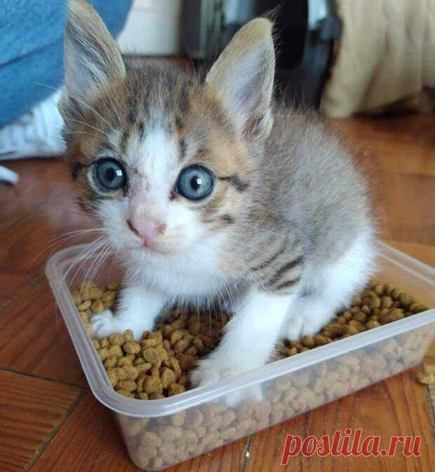 Фото, которые докажут, что котенок в доме — это минимум 100 граммов счастья и целый вагон приключений - Друг - медиаплатформа МирТесен Наверняка многим из тех, кто завел дома котенка, знакомо чувство щемящей нежности, когда смотришь на крошечный пушистый комочек и буквально хочешь затискать его в объятиях.А в голове звучит: «Вот бы он подольше оставался таким малышом и не вырастал в наглую рыжую морду». Когда ты еще не совсем