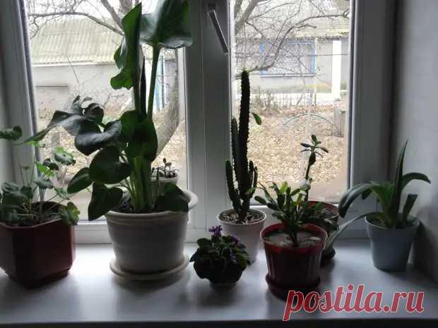 Комнатные растения зимой или как зимовать зелёным питомцам - Цветочки - медиаплатформа МирТесен