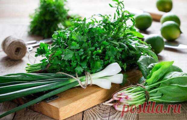 Какая зелень самая полезная... - Познавательный сайт ,,1000 мелочей