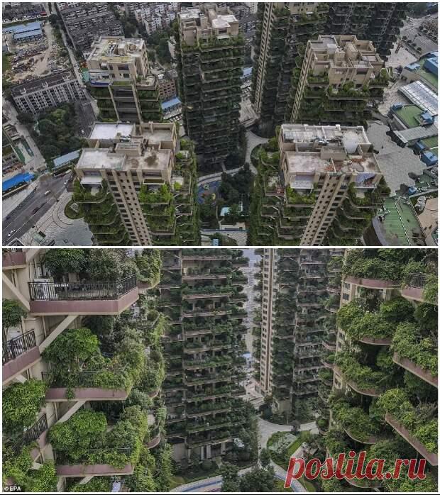 Почему первый вертикальный лес китайского города вместо рая превратился в элитную «заброшку»