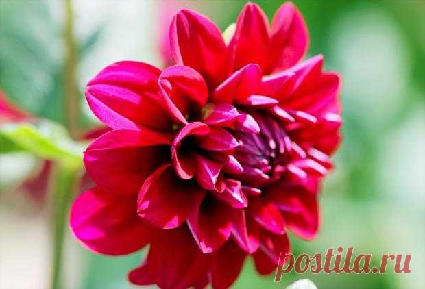 8 красивых осенних цветов, которые стоит посадить прямо сейчас