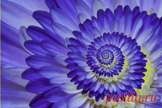 Макросъемка: 17 фото цветов вблизи, которые вас удивят
