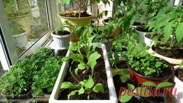 Делу время, овощам — январь: что уже можно посадить С наступлением января садоводы начинают задумываться о предстоящем сезоне и подготовке рассады.... Читай дальше на сайте. Жми подробнее ➡