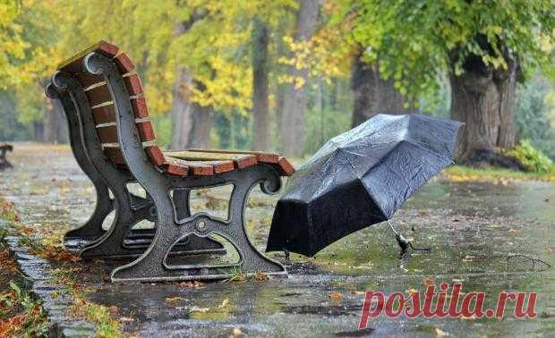 Как растения могут предсказывать погоду: интересные народные наблюдения