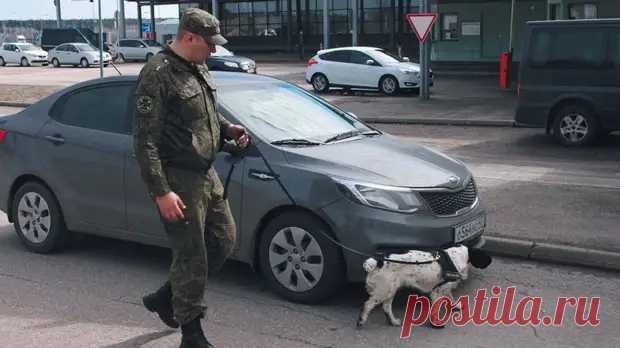 Контрабандисты не пройдут: как работают собаки на границе России - ЖИВОЙ УГОЛОК - медиаплатформа МирТесен