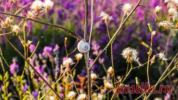 Цветы помогут справится с насекомыми-вредителями - Слово и дело - медиаплатформа МирТесен