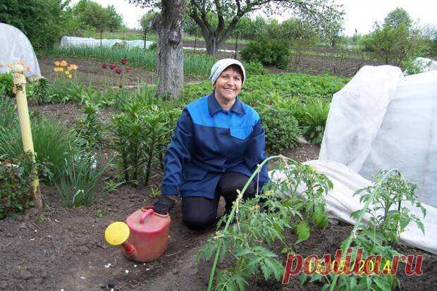 Полезные советы не только начинающим, но и опытным огородникам • Для быстрого роста помидор Рассаду помидоров поливают раствором йода для более... Читай дальше на сайте. Жми подробнее ➡