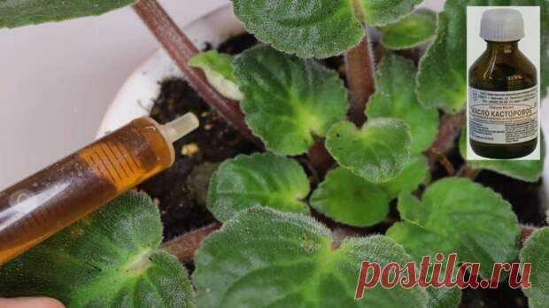 Бабушкин метод для пышного цветения: всего 10 капель под растение Домашние цветы, как и любые другие растения, нуждаются в периодической подкормке. А... Читай дальше на сайте. Жми подробнее ➡