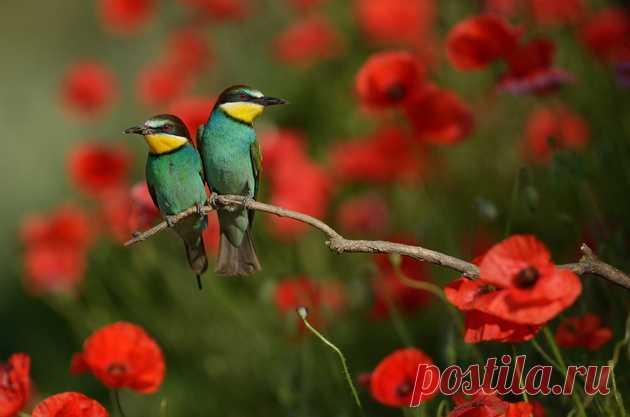 ФотоТелеграф » Мир птиц Радослава Цветкова