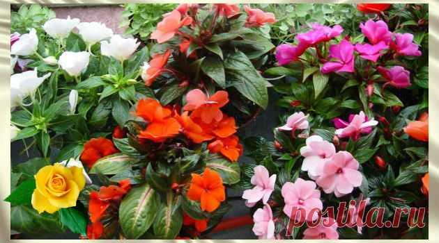 10 советов по уходу за домашними растениями. Чем